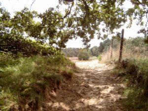 Vriezerbrug omgeving bos & heide