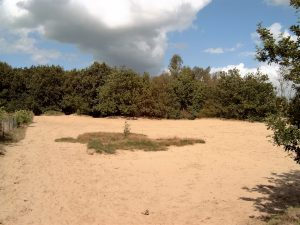 Vriezerbrug omgeving zandvlakte